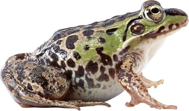 大湾村青蛙养殖基地