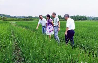 加强海水稻高值化加工技术培训