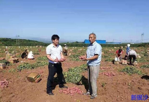 洛阳这里的红薯出名了!日售5000斤,直供湛江