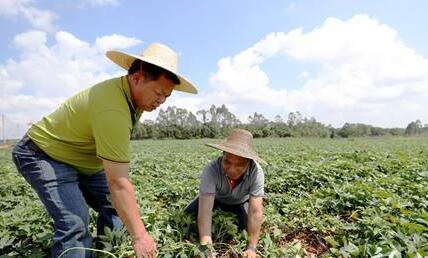 雷州公和村产业发展助力长效脱贫