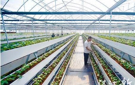 大型田园综合体开发助力乡村振兴