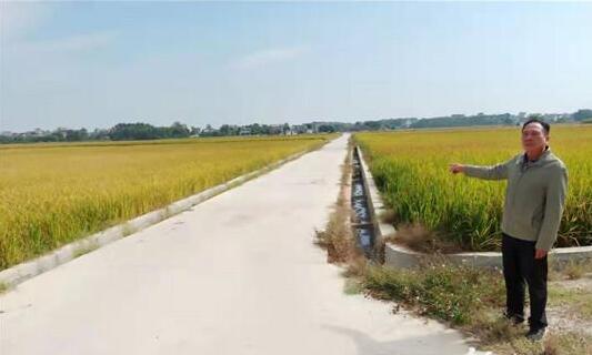 廉江珠盘海村完成垦造水田上千亩