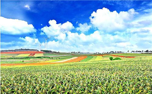 徐闻4月13日举行农海产品推销直播