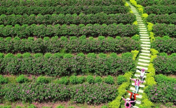 湛江将新建智慧科普农业产业园,占地1500亩,总投资18000万..